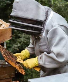 Bee Protective Clothing & Tools